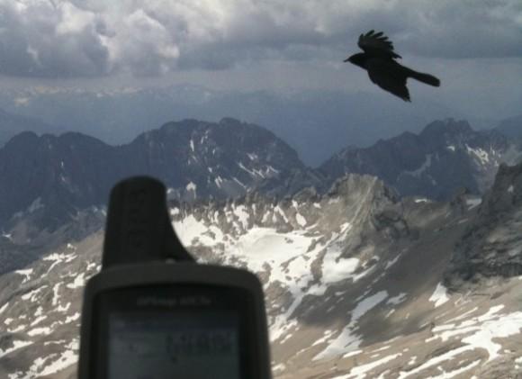 Alpendohle auf der Zugspitze